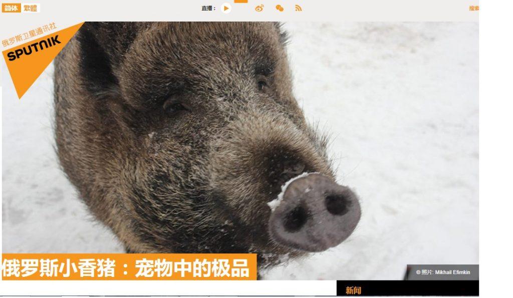 Как китайцам про Машку рассказывали / Фото: скриншот